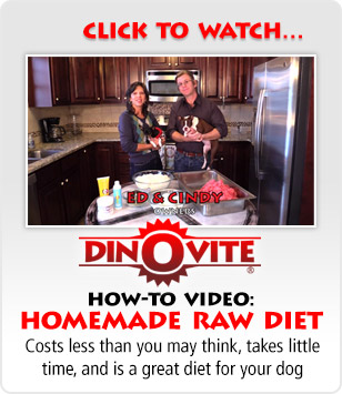 How-To Video: Homemade Raw Diet